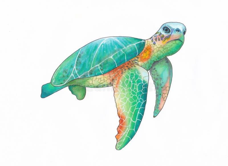 Ilustração de um esboço handdrawn colorido da tartaruga de mar imagens de stock