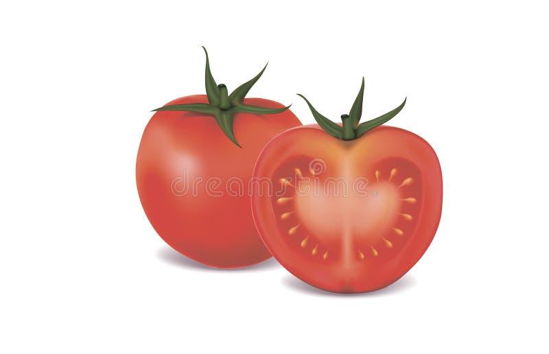 Ilustração de um tomate no fundo branco imagem de stock