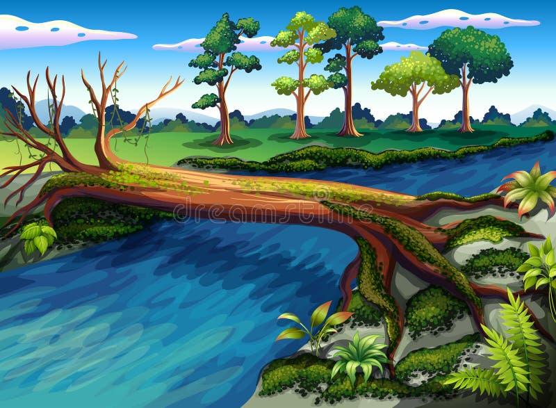 Uma árvore com as algas no rio ilustração royalty free