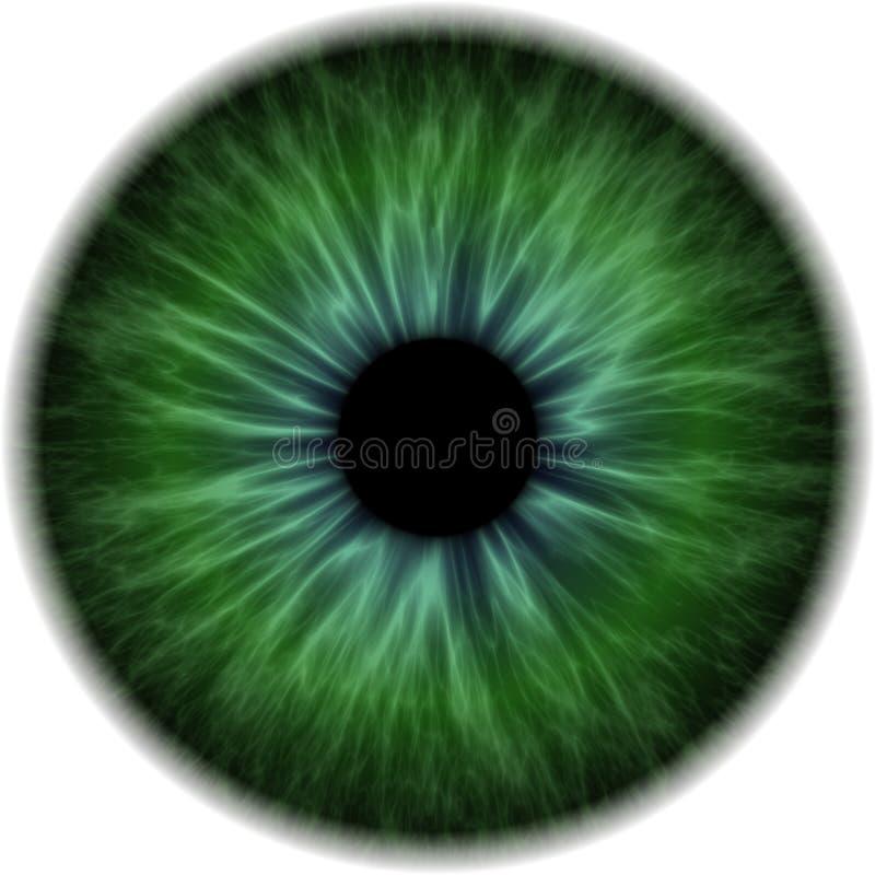 Ilustração de uma íris humana verde ilustração royalty free
