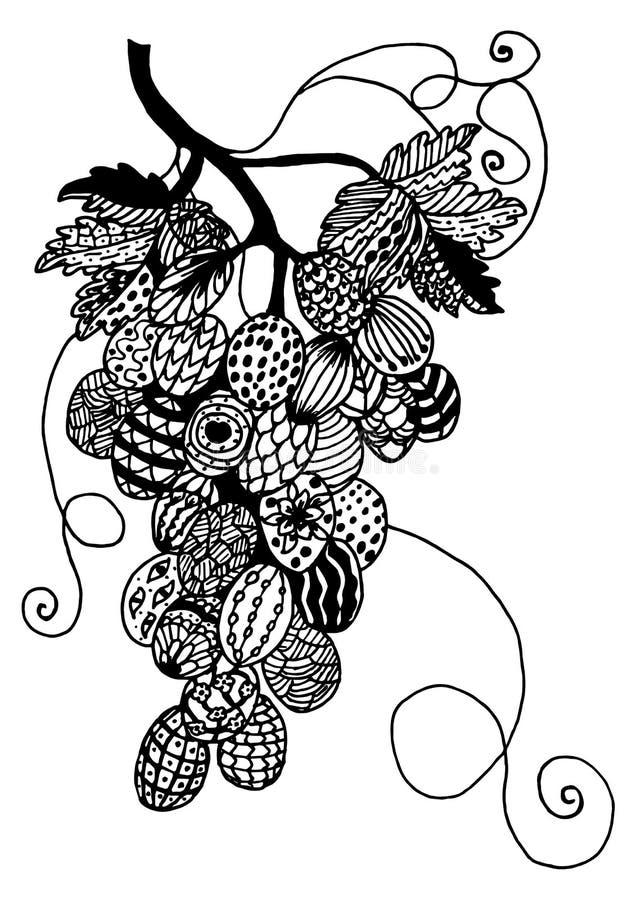 Ilustração decorativa das uvas foto de stock
