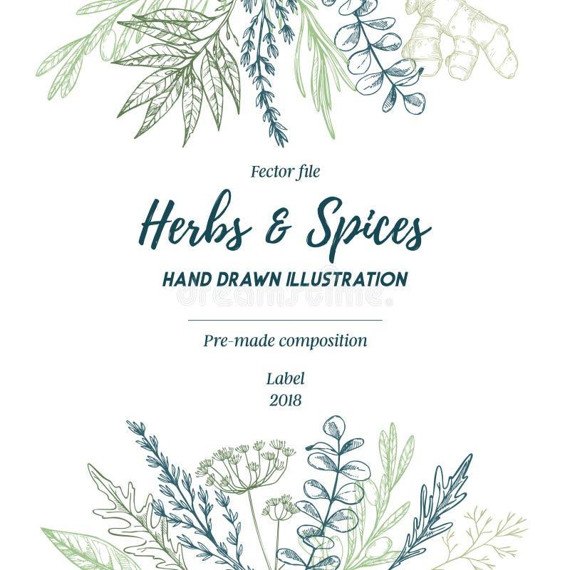 Ilustração desenhada mão do vetor Quadro com ervas e caída das especiarias ilustração royalty free