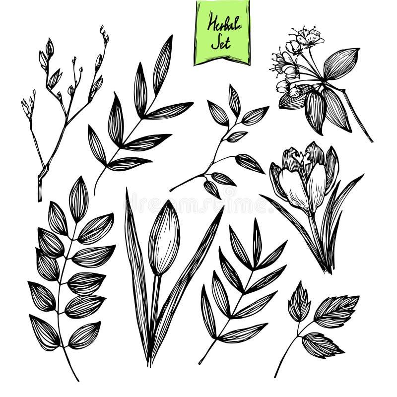 Ilustração desenhado à mão do vetor - grupo de folhas e de flores ilustração do vetor