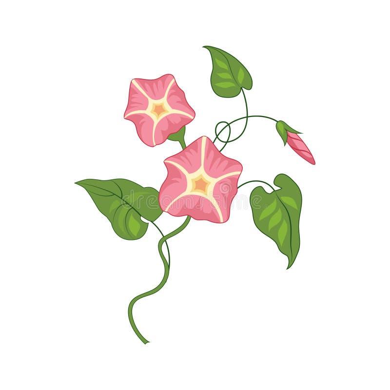 Ilustração detalhada de Glory Wild Flower Hand Drawn da manhã ilustração royalty free