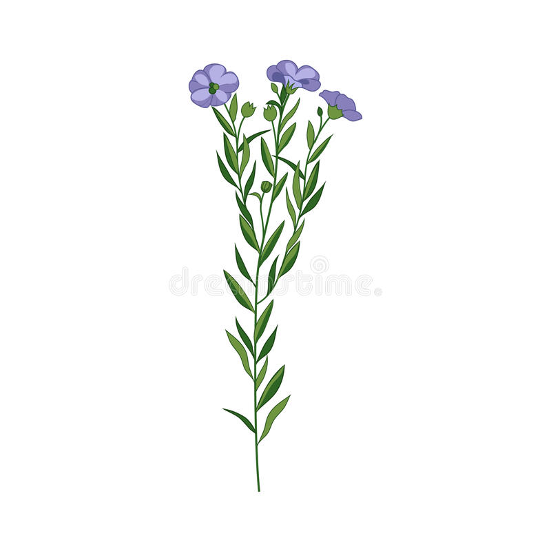 Ilustração detalhada tirada mão da flor selvagem do linho ilustração royalty free