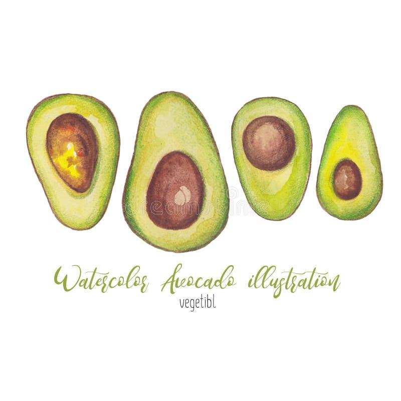 Ilustração do abacate da aquarela para o caderno, tampa, livro, etiquetas, bandeira, logotipo, cartão foto de stock