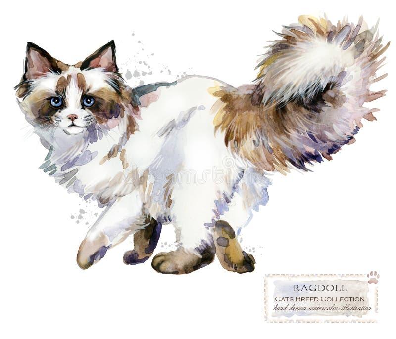 Ilustração do animal de estimação da casa da aquarela do gato de Ragdoll Os gatos produzem séries Animal doméstico ilustração do vetor