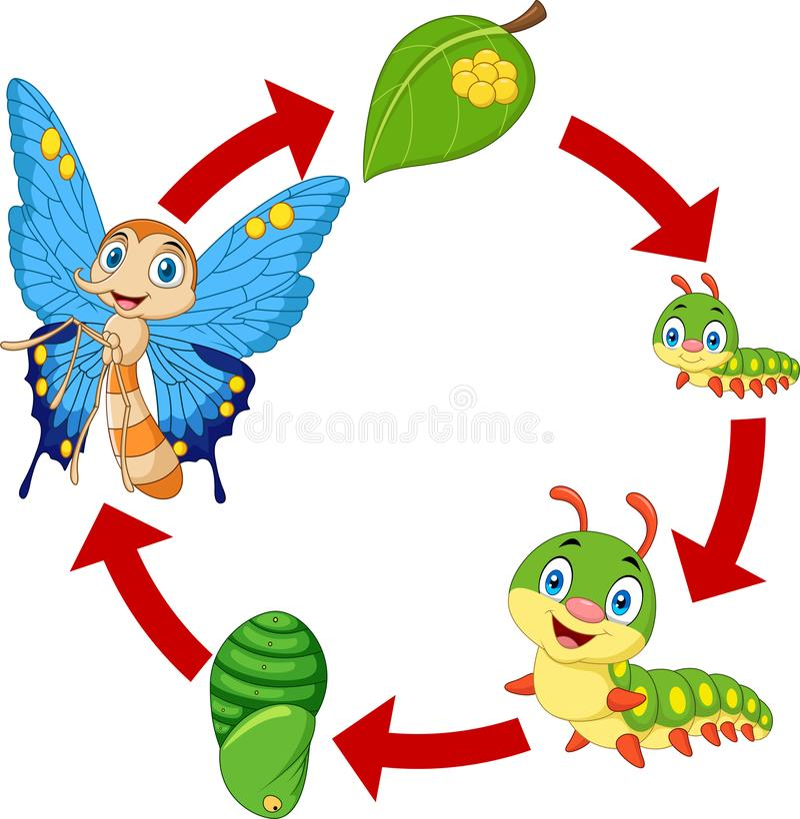 Ilustração do ciclo de vida da borboleta ilustração do vetor