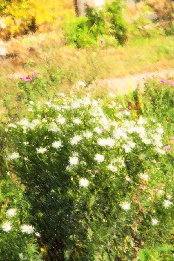 A ilustração do clumb do outono branco floresce no parque imagens de stock royalty free