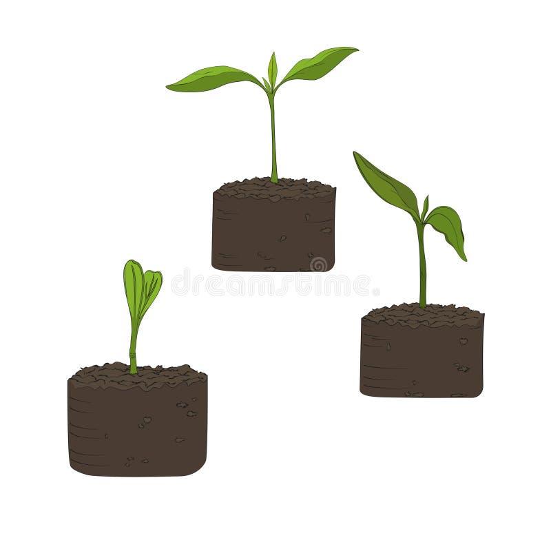 Ilustração do crescimento de plantas cultivadas orgânicas da semente na terra e da fase da germinação das primeiras folhas ilustração stock