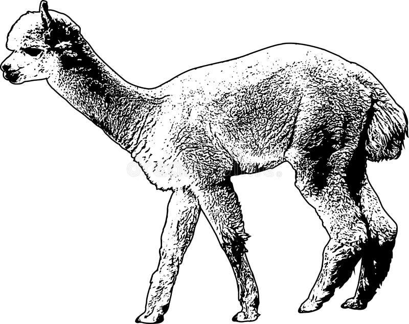 Ilustração do esboço da alpaca ilustração do vetor