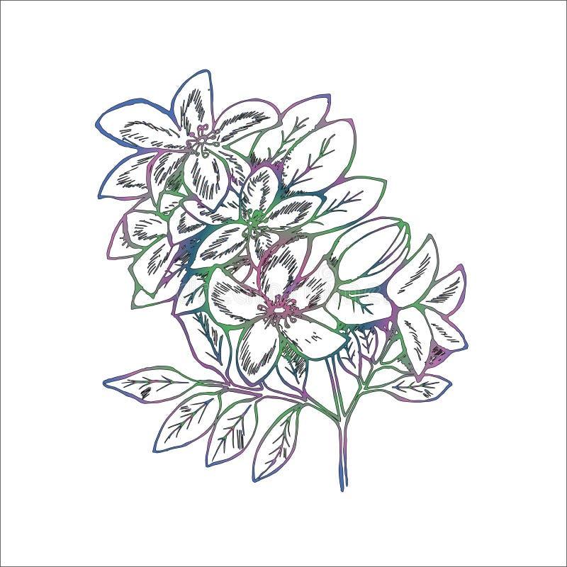 Ilustração do inclinação dos ramos das flores do lilás Gr?ficos manuais imagem de stock royalty free