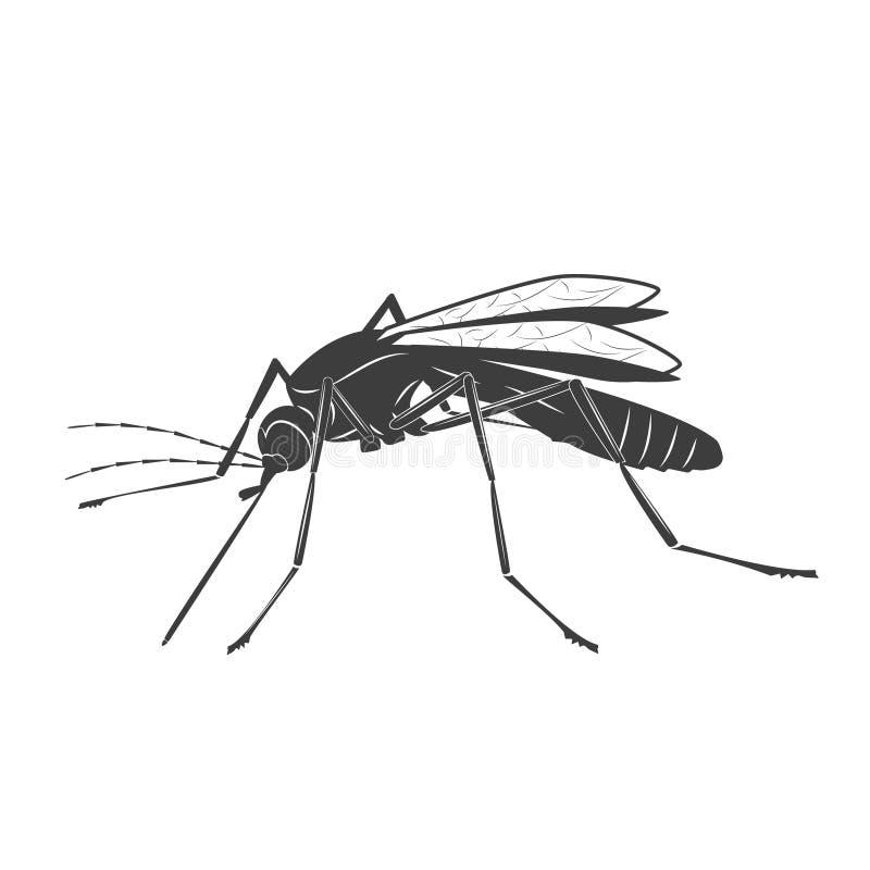 Ilustração do mosquito no fundo branco ilustração royalty free