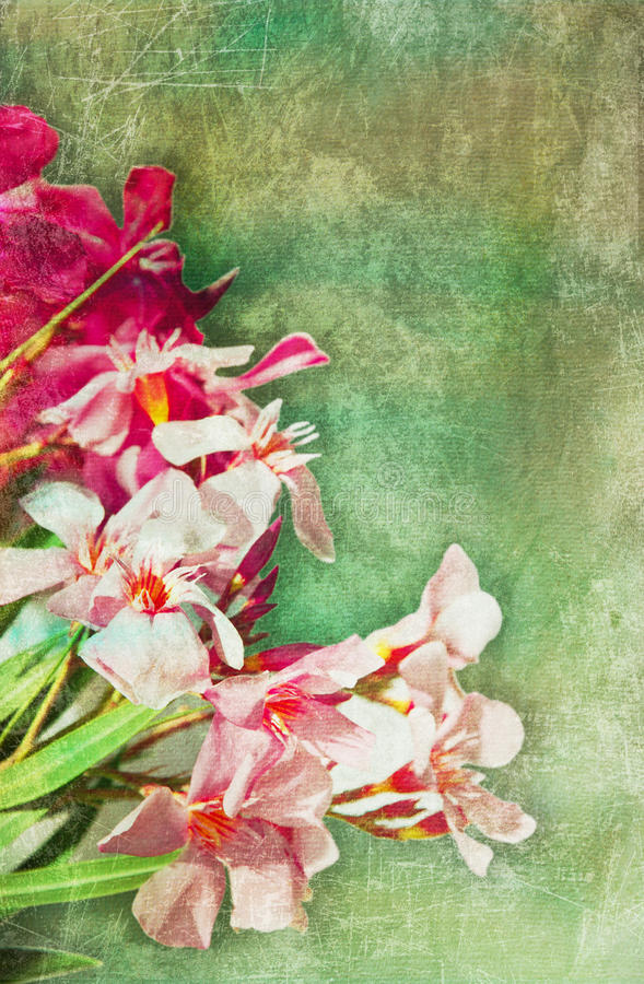 Ilustração do oleander do vintage ilustração do vetor