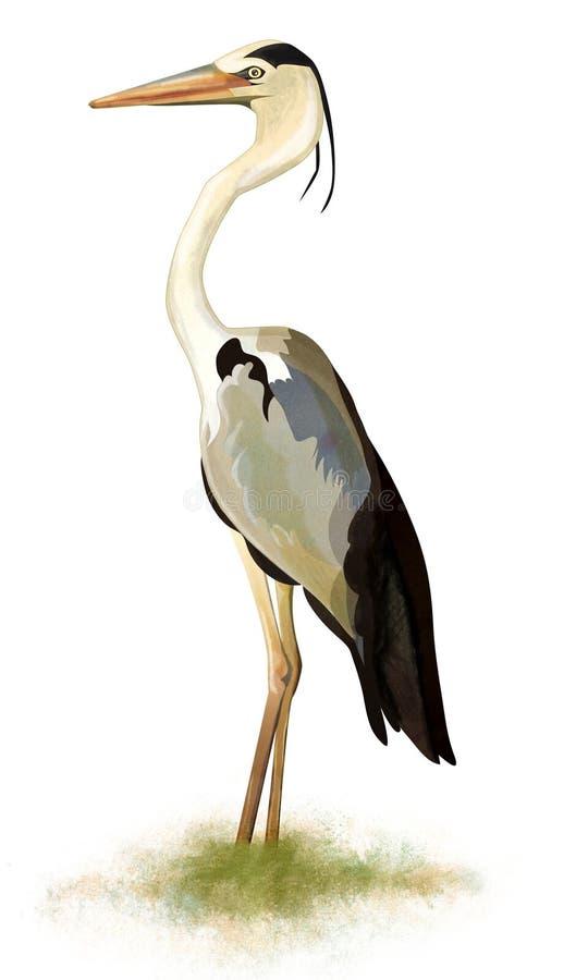 Ilustração do pássaro da garça-real na grama ilustração do vetor