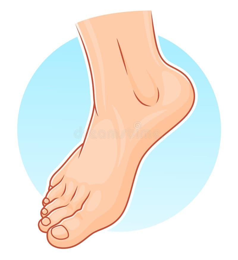 Ilustração do pé humano ilustração stock