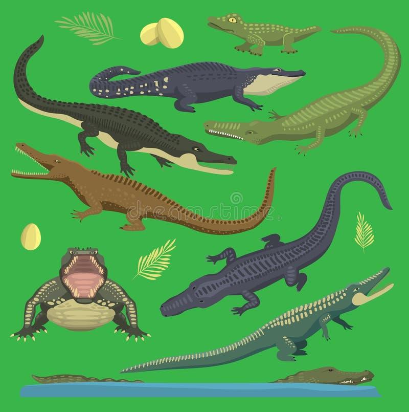 A ilustração do réptil do vetor do verde do jacaré do crocodilo de animais selvagens ajustou o estilo dos desenhos animados da co ilustração royalty free