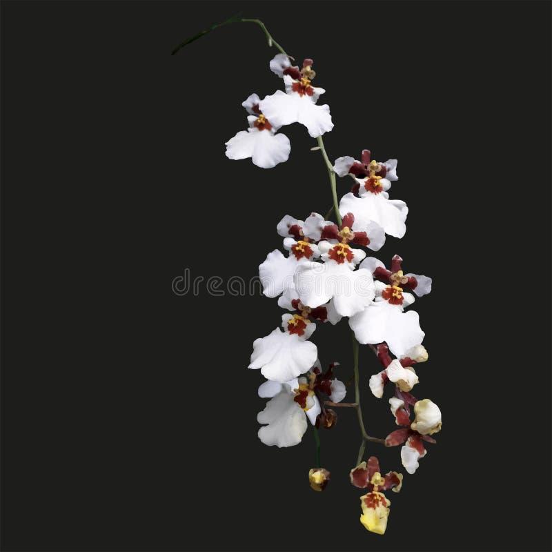 Ilustração do ramo completamente de orquídeas brancas e roxas maravilhosas e elegantes ilustração stock