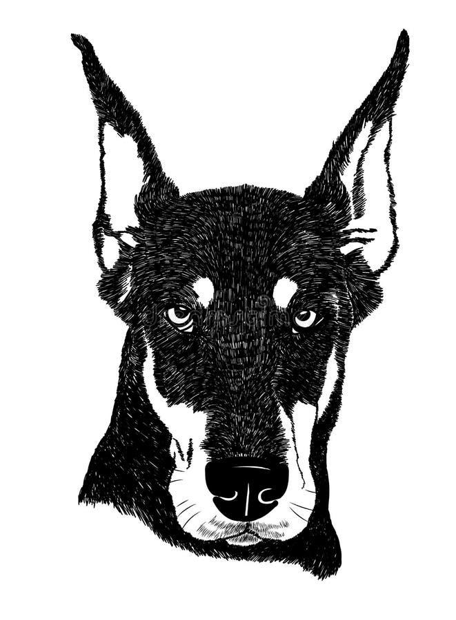 Ilustração do retrato do cão do pinscher do Doberman no vetor ilustração do vetor