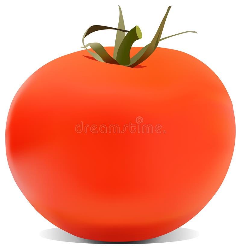 A ilustração do tomate imagens de stock royalty free