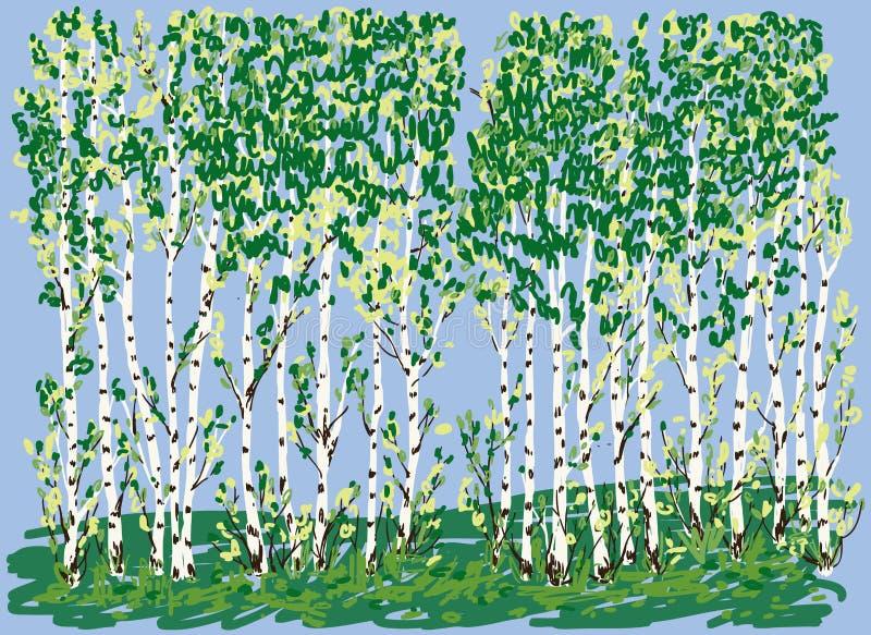 Ilustração do vetor do bosque do vidoeiro no verão ilustração do vetor