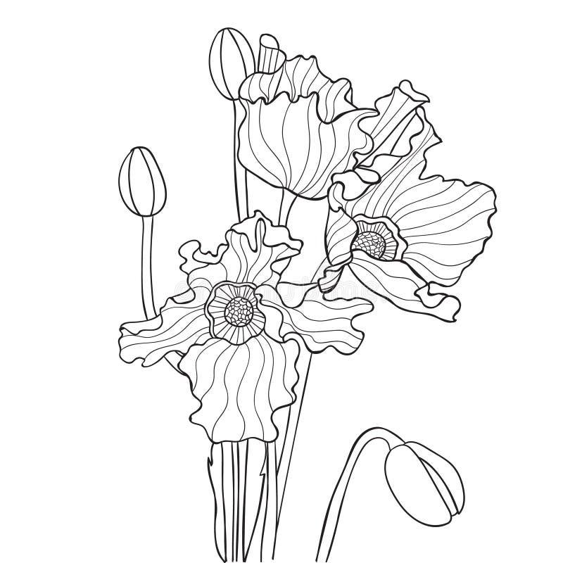 Ilustração do vetor com a papoila em cores preto e branco ilustração stock