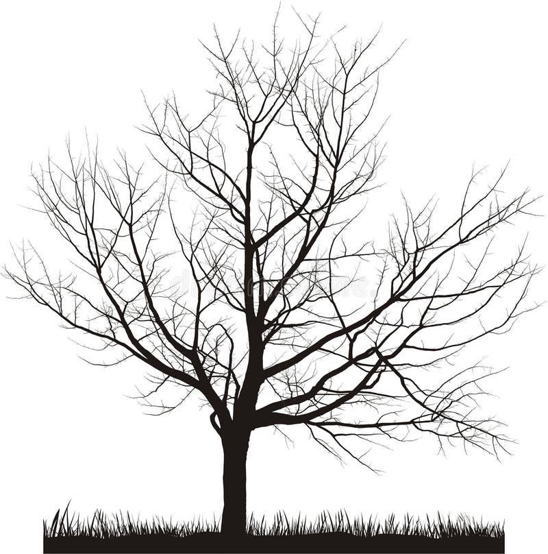 Ilustração do vetor da árvore de cereja no inverno ilustração royalty free