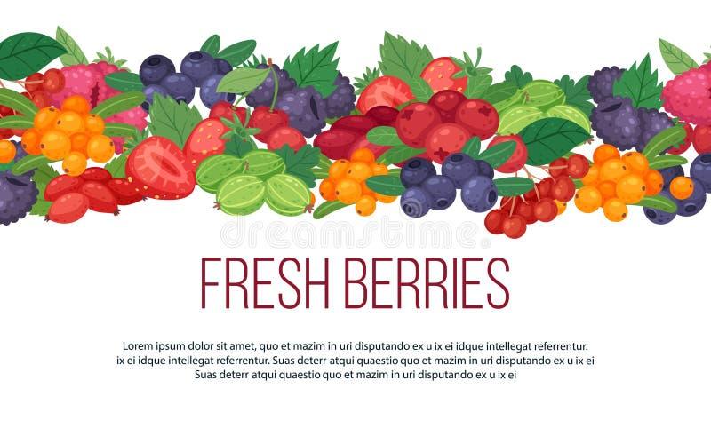 Ilustração do vetor da bandeira dos frutos e das bagas da floresta Framboesa suculenta e fresca, morango, amora-preta, mirtilo ilustração do vetor