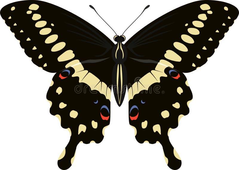 Ilustração do vetor da borboleta do lormieri de Papilio ilustração royalty free