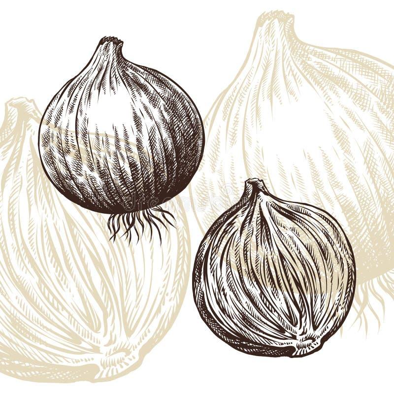 Ilustração do vetor da gravura da tração da cebola imagem de stock royalty free