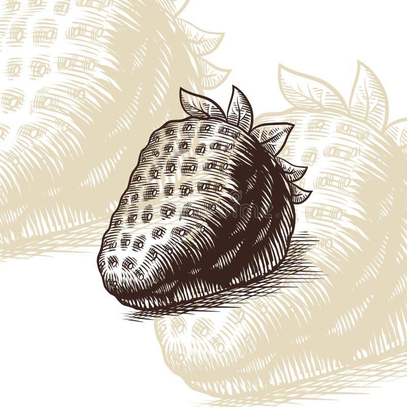 Ilustração do vetor da gravura da tração da morango imagem de stock royalty free