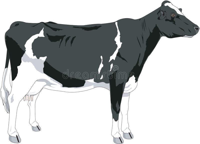 Ilustração do vetor da vaca ilustração royalty free