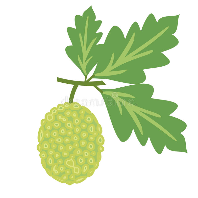 Ilustração do vetor das frutas-pão ilustração royalty free