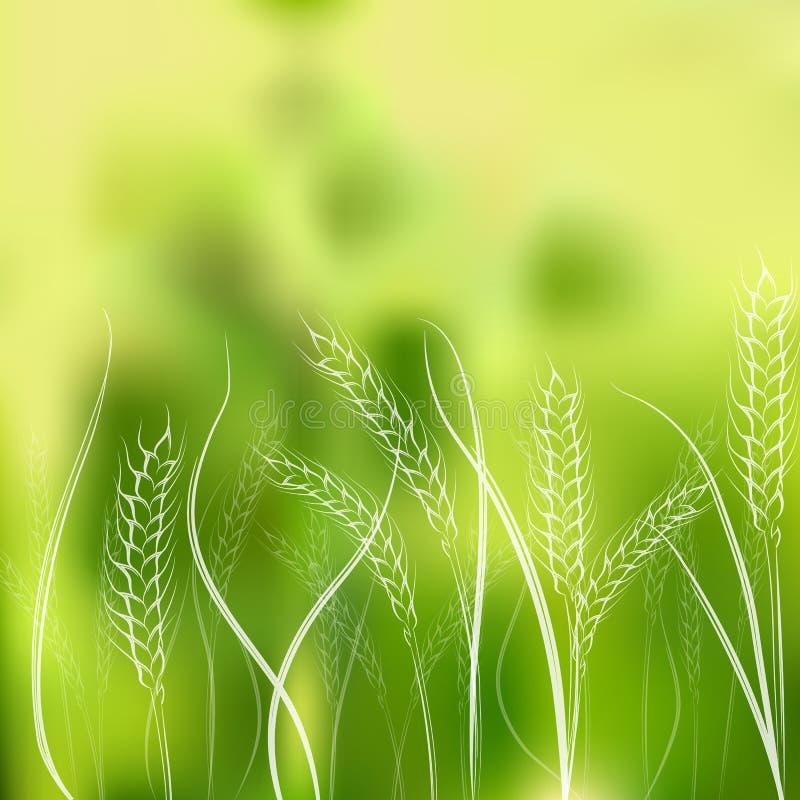 Ilustração do vetor das orelhas do trigo do desenho da mão ilustração stock