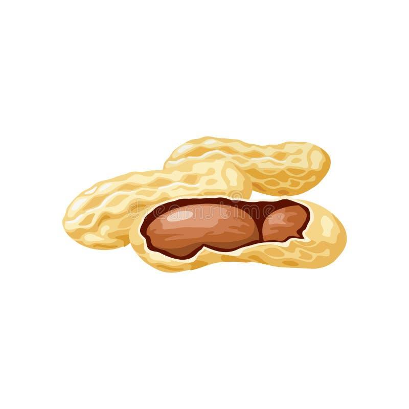 A ilustração do vetor de um amendoim descascou inteiro, rachado em metades Símbolo do alimento Porcas e núcleos inteiros do amend ilustração do vetor