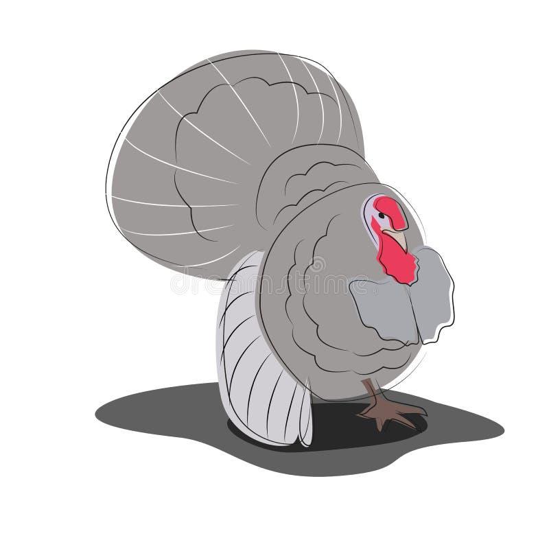 Ilustração do vetor de um peru selvagem masculino ilustração royalty free