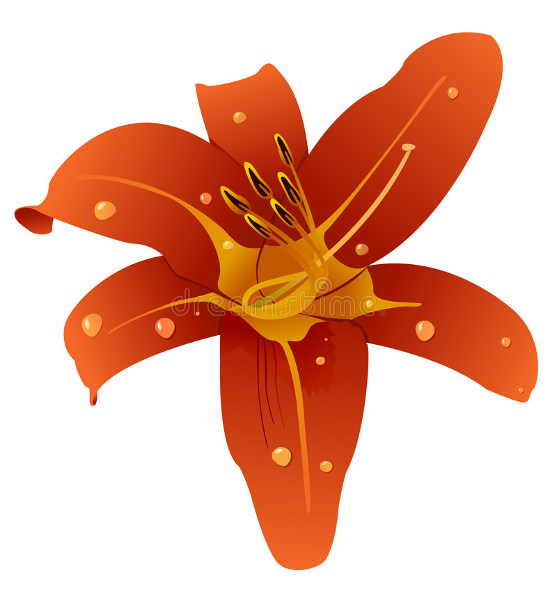 Ilustração do vetor de uma orquídea bonita ilustração do vetor