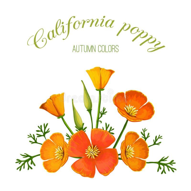 Ilustração do vetor do arranjo de flor Papoila de Califórnia ilustração do vetor