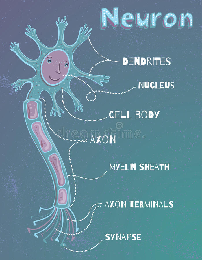 Ilustração do vetor do neurônio humano para crianças ilustração royalty free