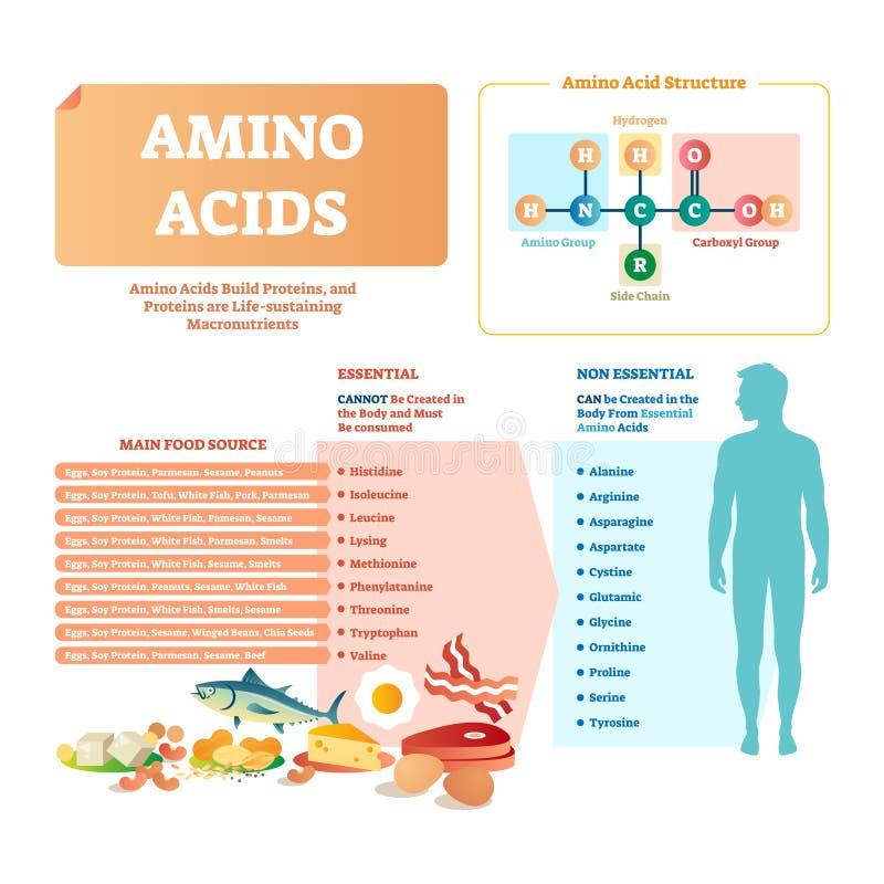 Ilustração do vetor dos ácidos aminados Lista com alimento e ácidos essenciais ilustração stock