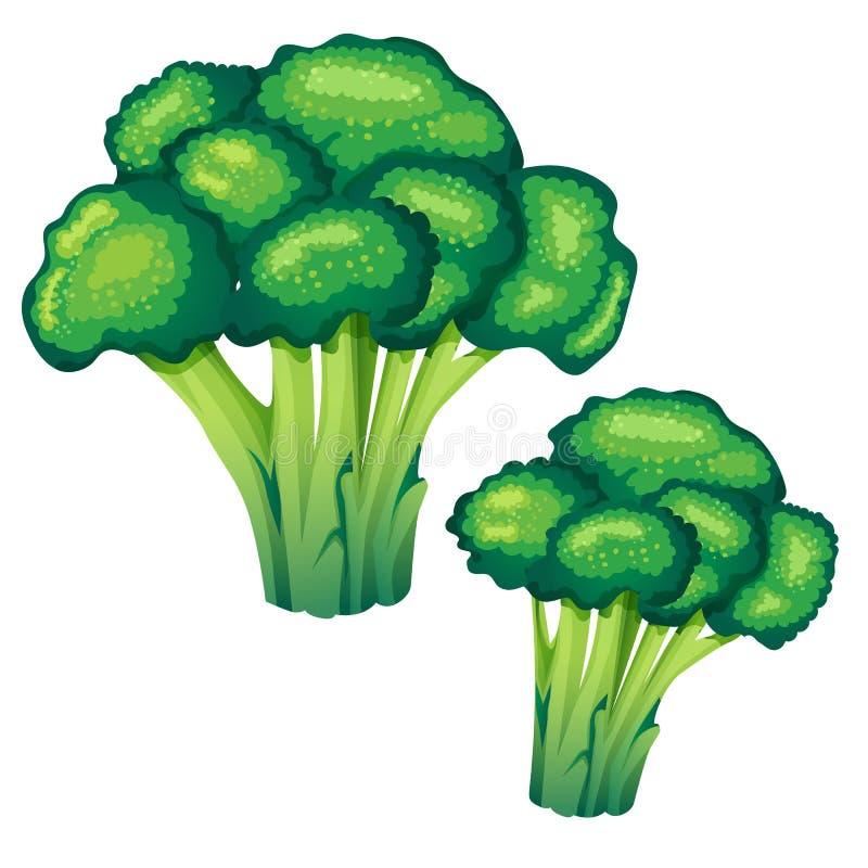 Ilustração do vetor dos brócolis ilustração royalty free