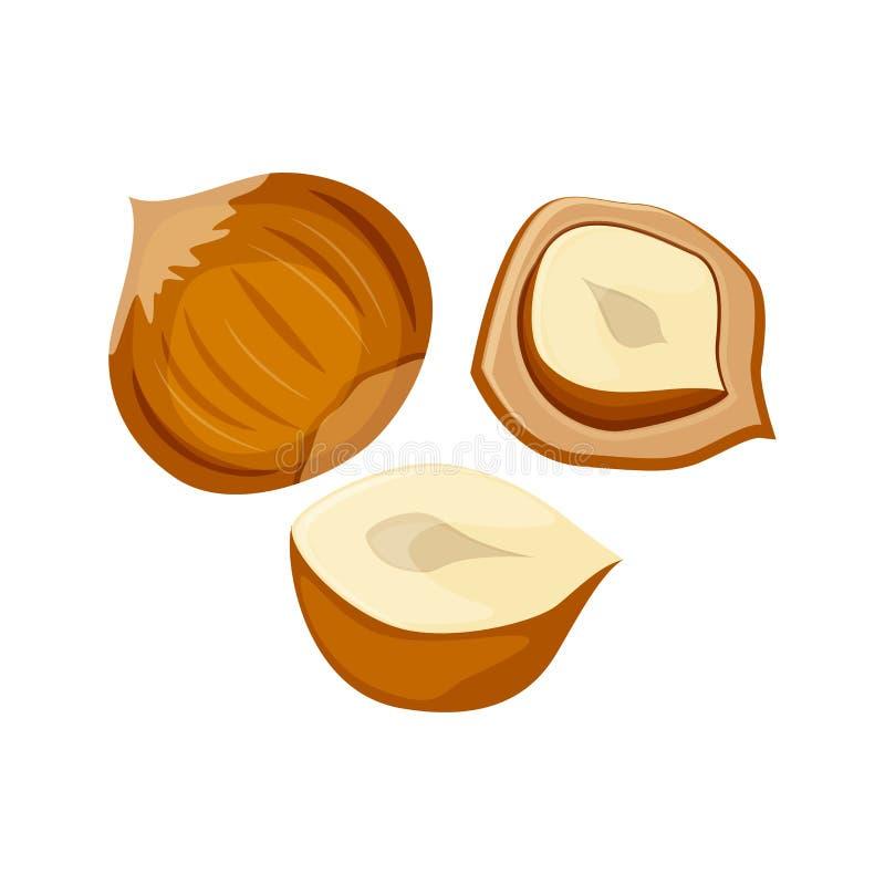 Ilustração do vetor do grupo das avelã isolada no fundo branco Vetor Nuts fotografia de stock