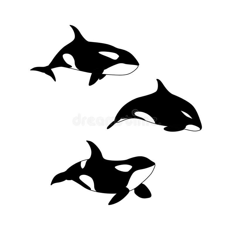 Ilustração do vetor do grupo tirado mão da baleia de assassino Família animal marinha da orca ilustração royalty free