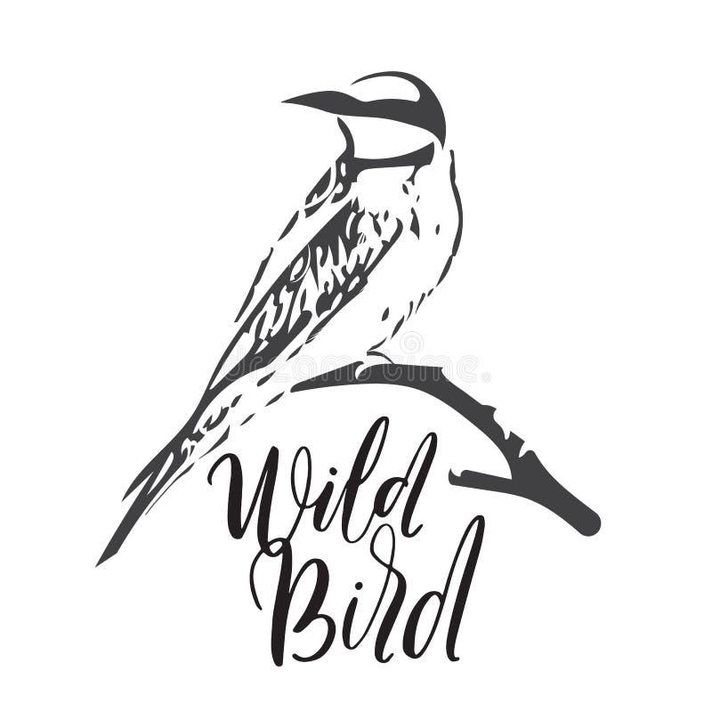 Ilustração do vetor do pássaro selvagem Abelha-comedor no ramo seco ilustração royalty free