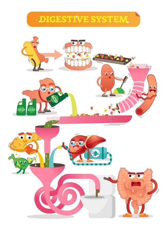 Ilustração do vetor do sistema digestivo Esquema cômico com intestino, rim, pâncreas, bexiga e fígado Diagrama com dois pontos tr ilustração royalty free