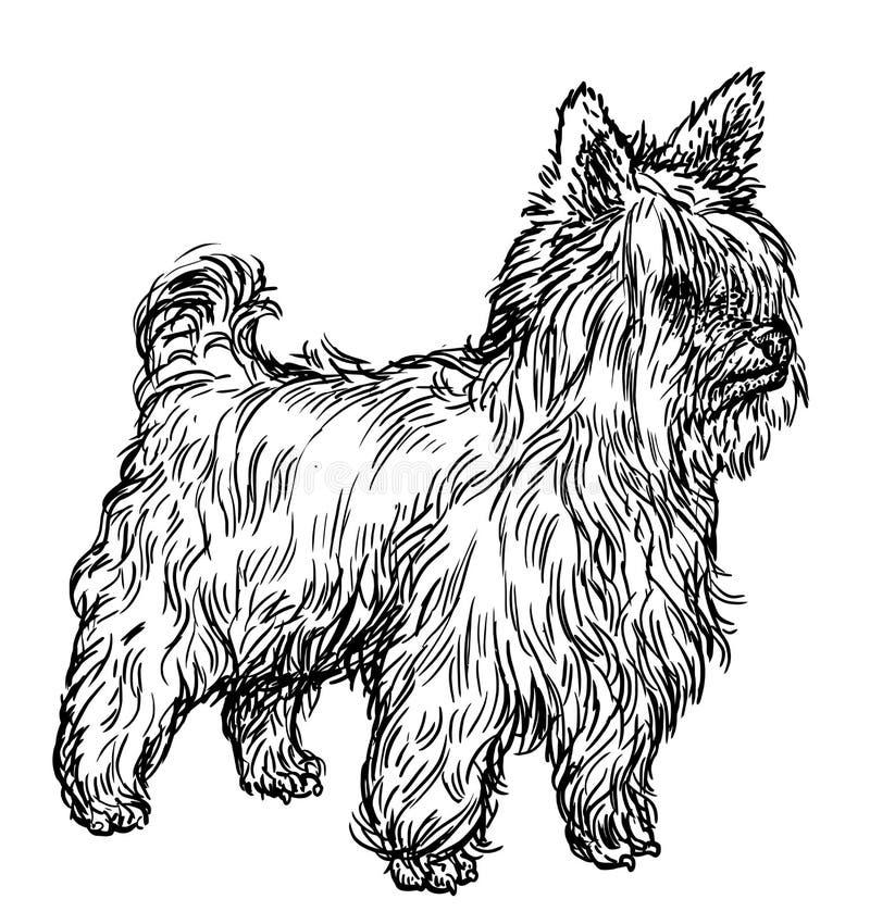 Ilustração do yorkshire terrier, desenho, gravura, tinta, linha arte, vetor ilustração stock