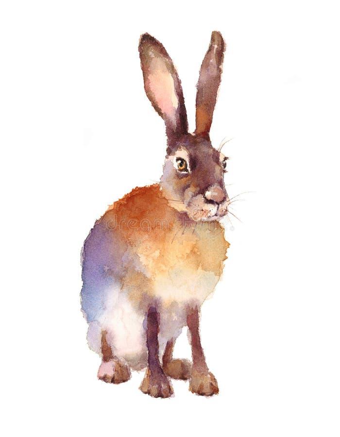 Ilustração dos animais da aquarela da lebre pintado à mão ilustração do vetor