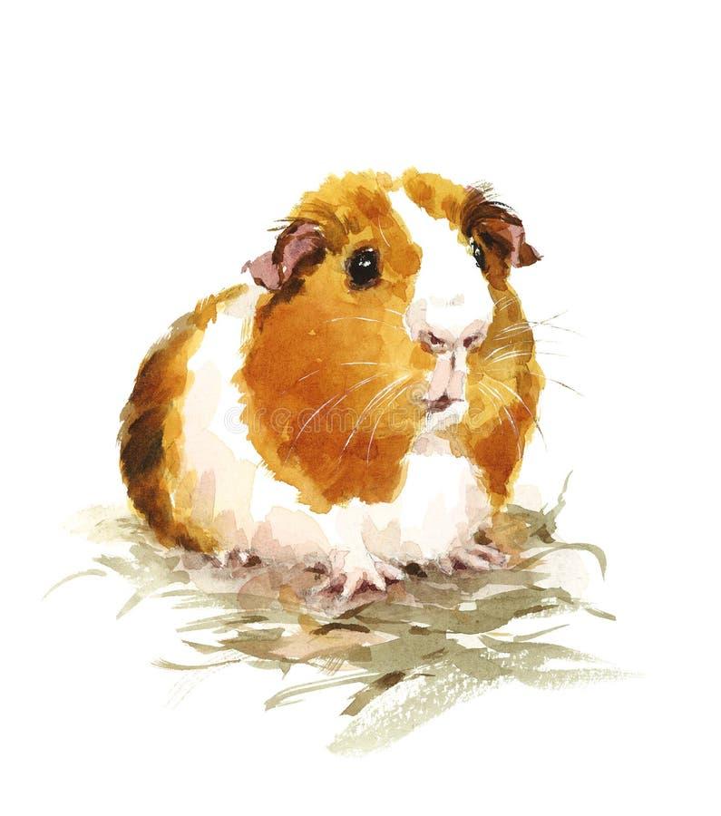 Ilustração dos animais de animais de estimação da aquarela da cobaia pintado à mão ilustração royalty free