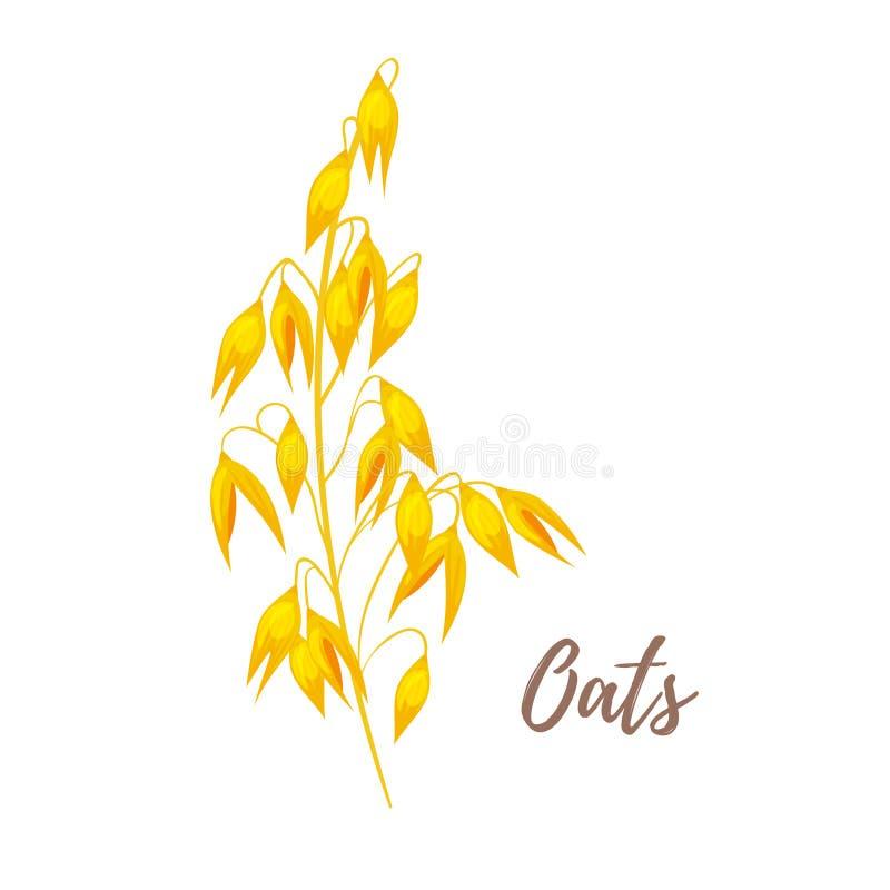 Ilustração dos cereais - aveia ilustração stock