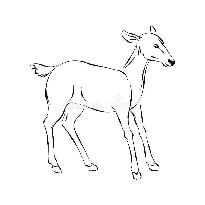 Ilustração dos cervos, vetor tirado mão ilustração do vetor